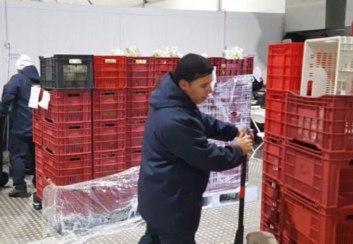 sistema de entrega chamada bolinhas